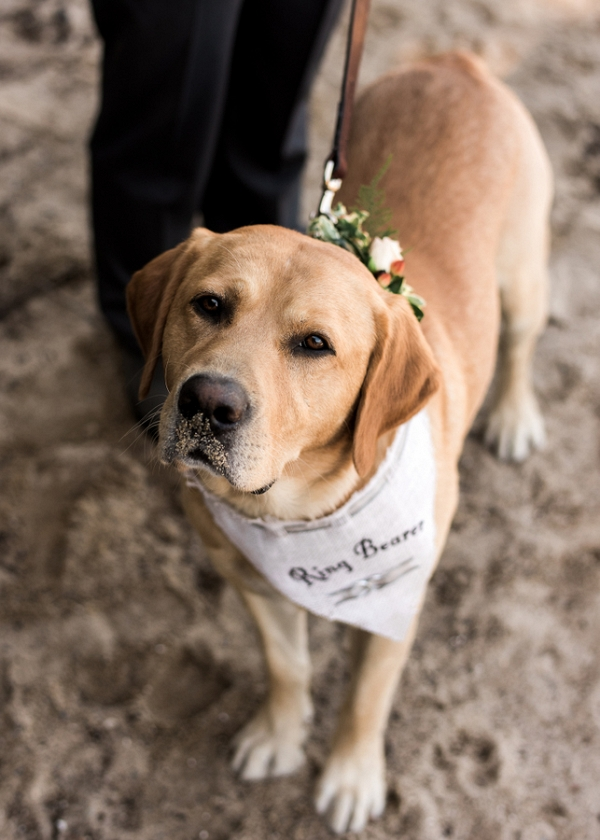Furry Family Can Have A Place in Your Wedding, Too!