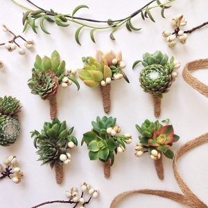 6 Assorted Double Succulent Boutonnieres with Tallow Berry
