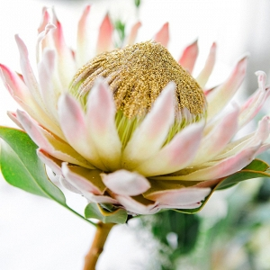 Protea with Gold Glitter Center