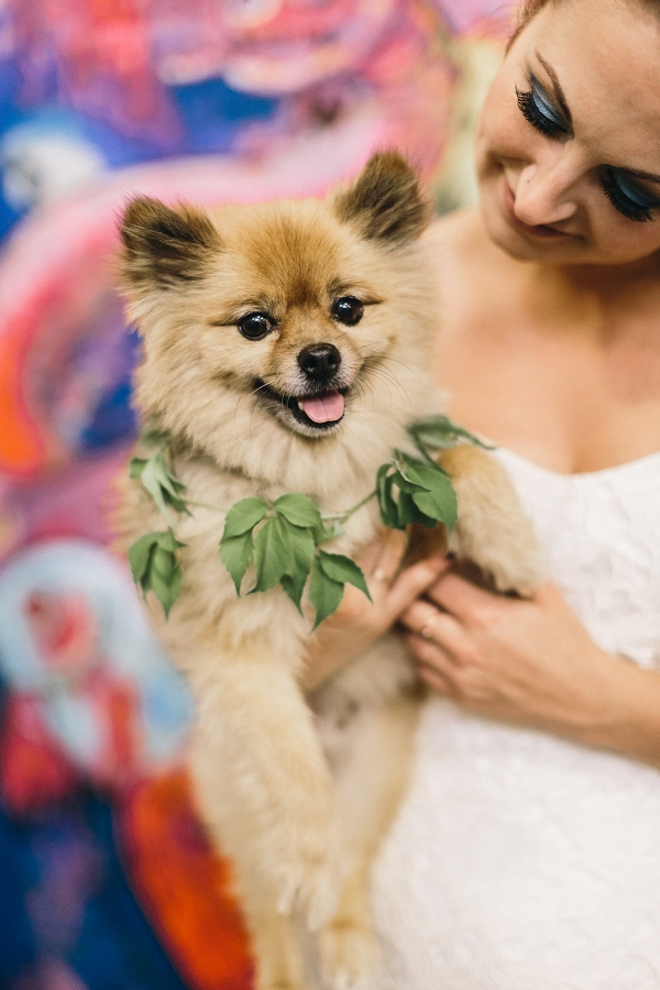 Pomeranian puppy with a foliage collar