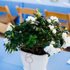 Potted Plant Centerpieces on The Budget Savvy Bride