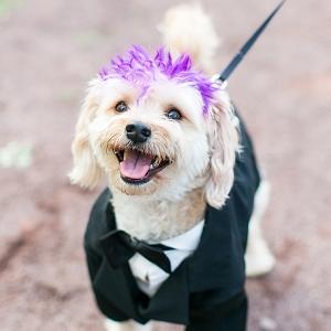 campground wedding on The Budget Savvy Bride