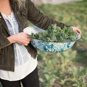 Farm gathering lettuce
