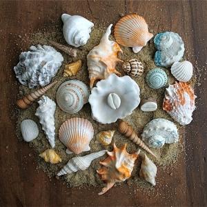 Edible chocolate seashells