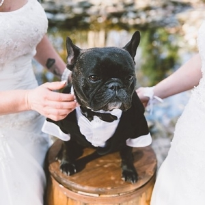 Wedding dog in tuxedo