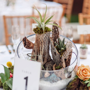 Terrarium wedding centerpieces with succulents