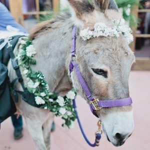Donkey Classic Blush Arizona Wedding