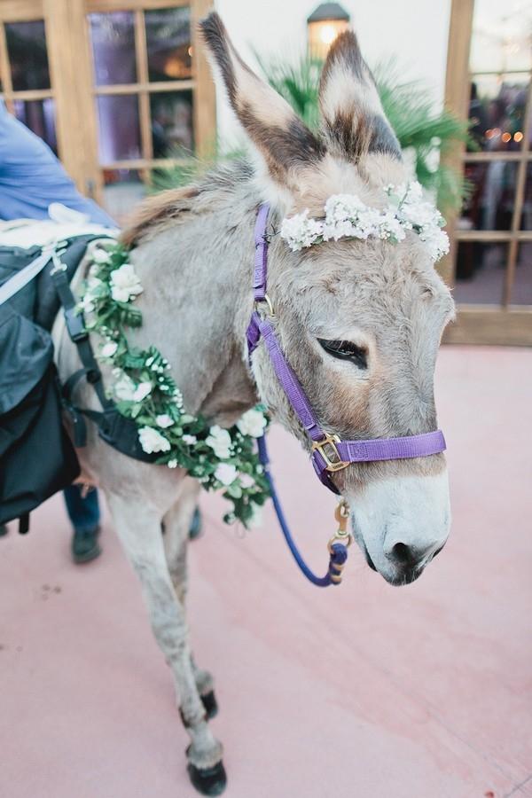 Donkey Classic Blush Arizona Wedding