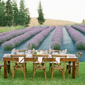 Rows of Lavender Provide The Perfect Background for an Intimate Reception