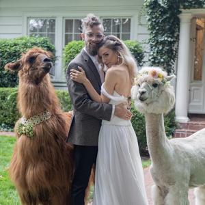 Llama wedding portrait
