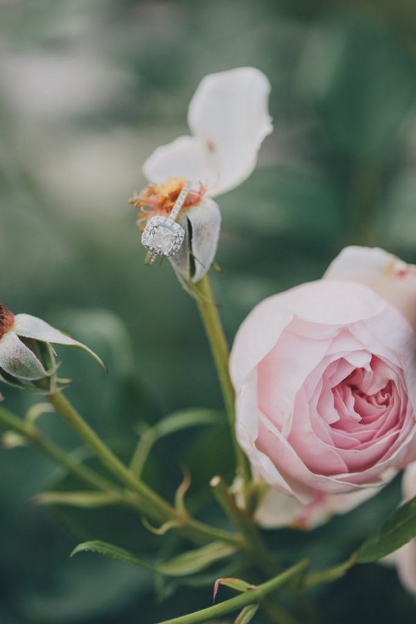 Exquisite engagement ring placed on a Rose in the garden