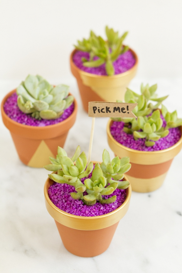 Make These DIY Succulent Favors
