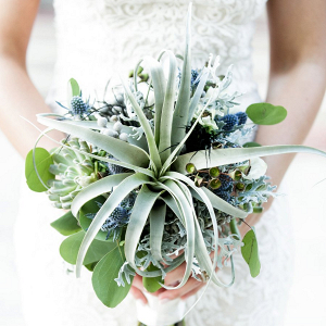 Air plant bouquet
