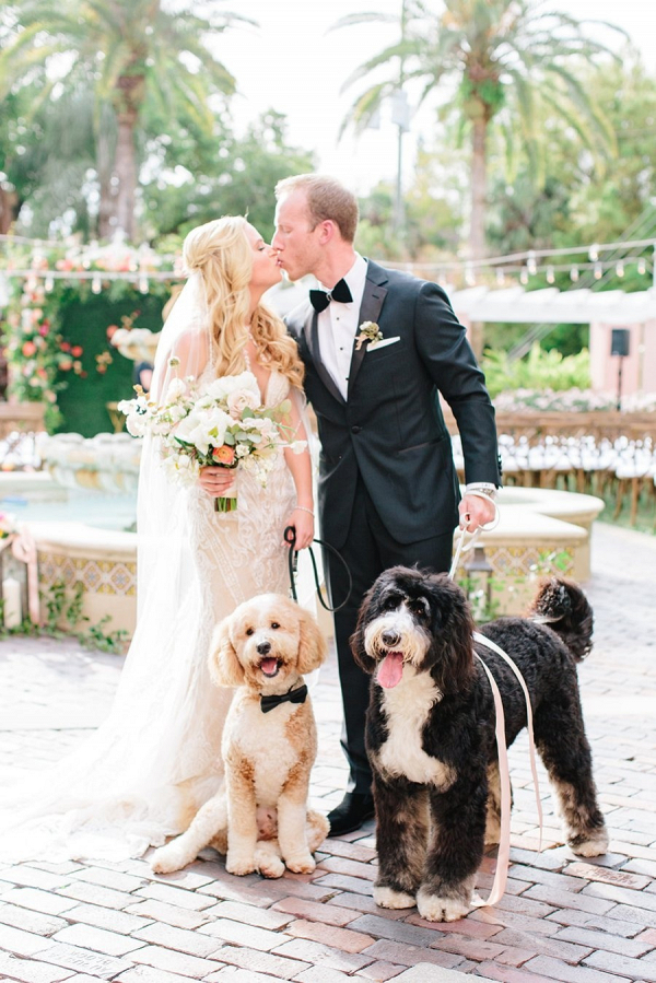Elegant bride and groom with their dogs