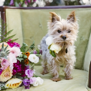 Cute Doggy In Colorful Whimsical Bridal Shoot