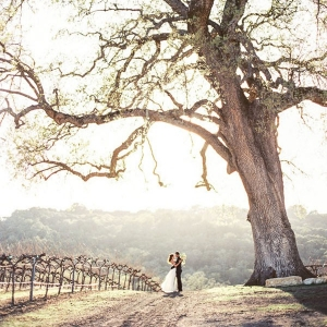 Romantic Bridal Portraits in the Vineyards