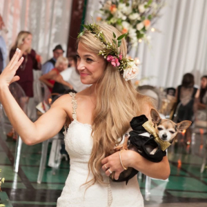 chihuahua-in-wedding