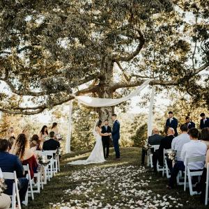 Wedding ceremony under giant tree