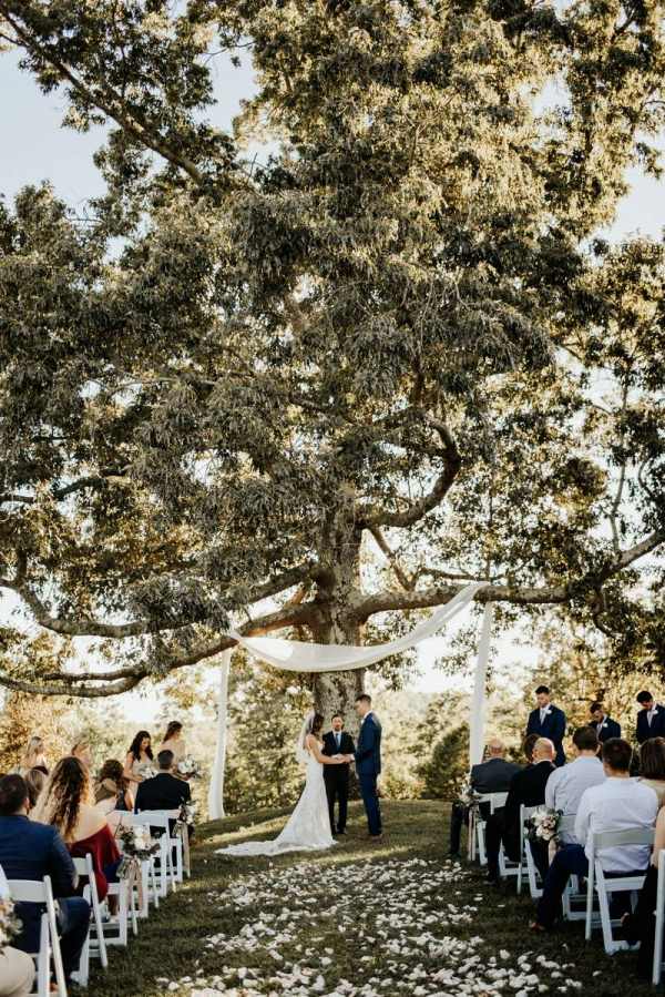 Wedding ceremony under giant tree
