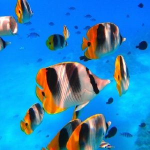 Snorkeling with Tropical Fishes
