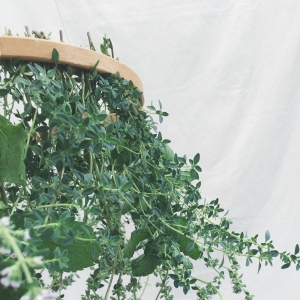 Herb Hanging Chandelier