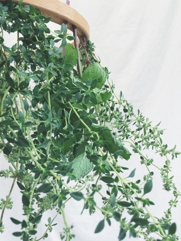 Fresh Herb Chandelier Tutorial