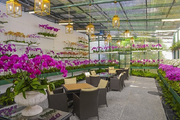 Orchid Room at Hotel Majestic