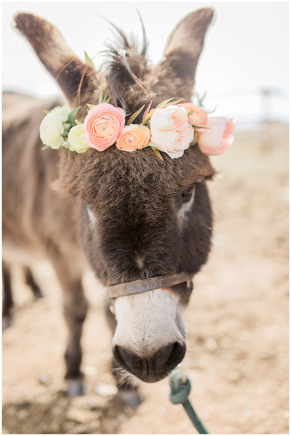 Donkey at Wedding