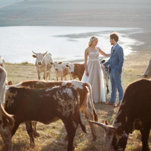 Bride & Groom with Nguni Cattle