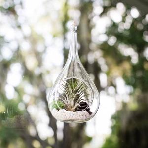 Teardrop terrarium
