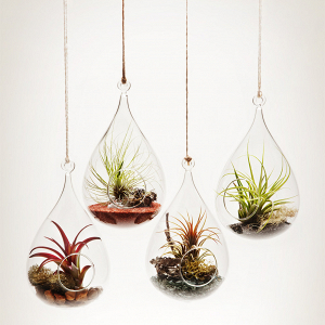 Suspended terrariums