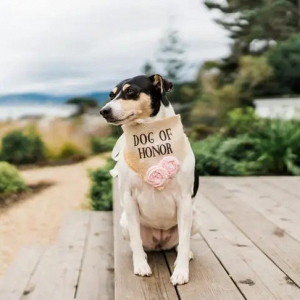 Dog of honor burlap bandana