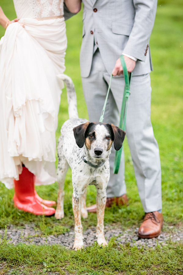 Dog Ring Bearer