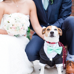 Wedding Dog in a Little Suit