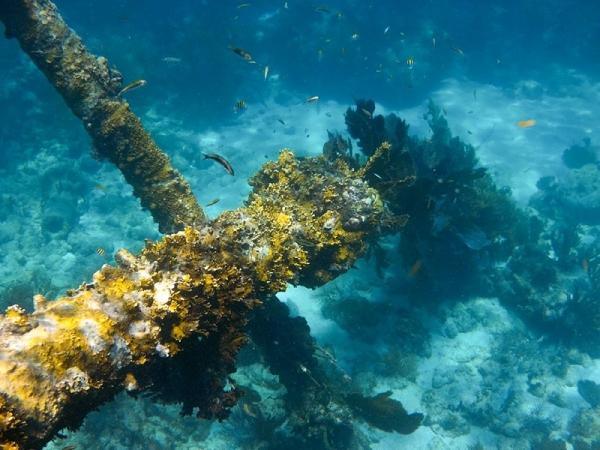 Romantic snorkeling in the Florida Keys