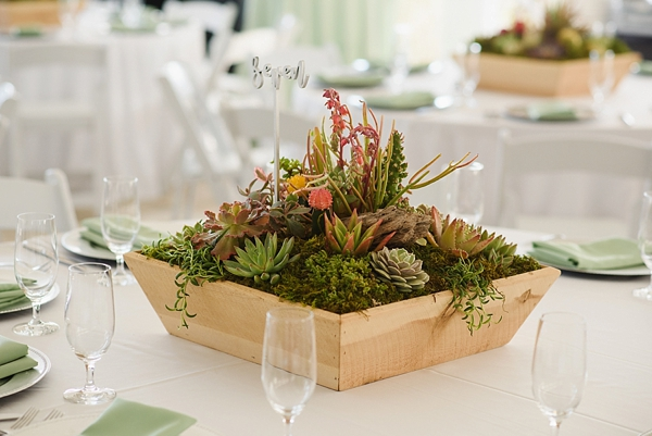 Succulent Filled Centerpiece