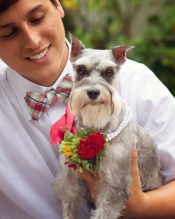 Dog with flower collar