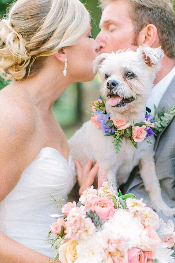 Wedding dog with flower collar