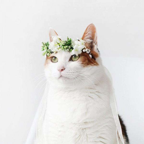 Wedding Cat Flower Crown
