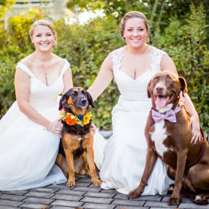 Brides with dogs