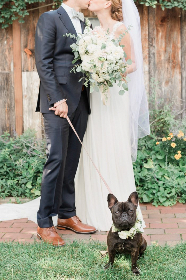 Frenchie at wedding
